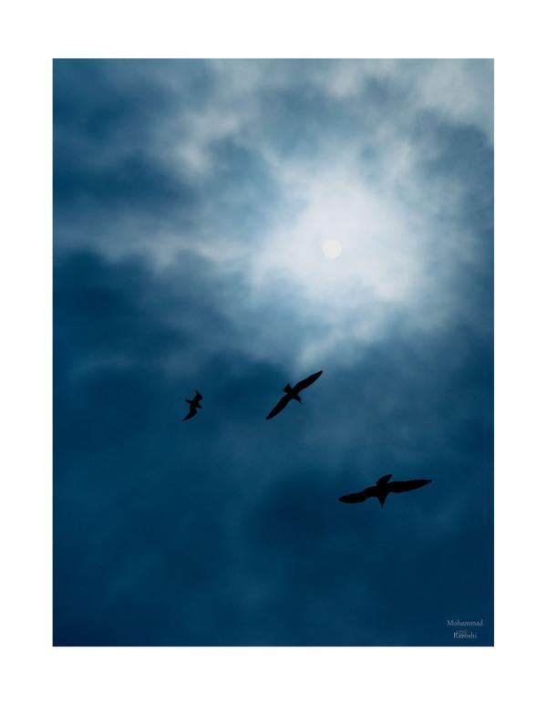 birds, sky, sun
