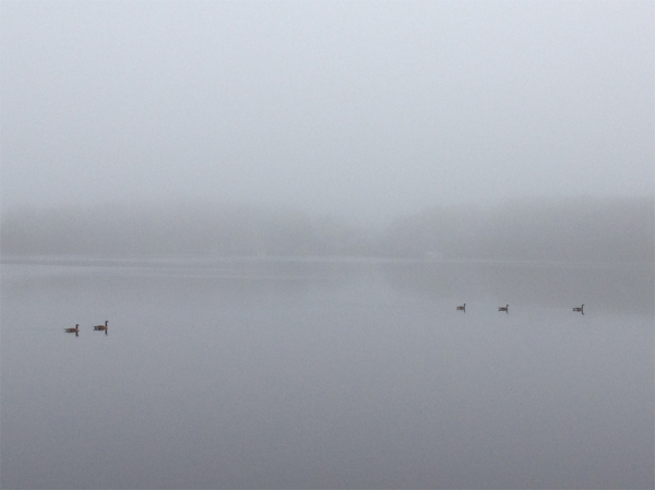 Geese in the mist 2