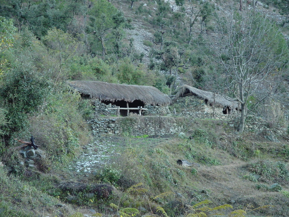 The cow sheds