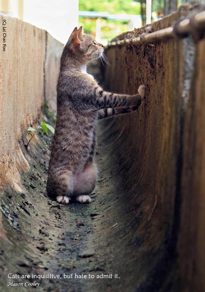 Stray Cat of Singapore