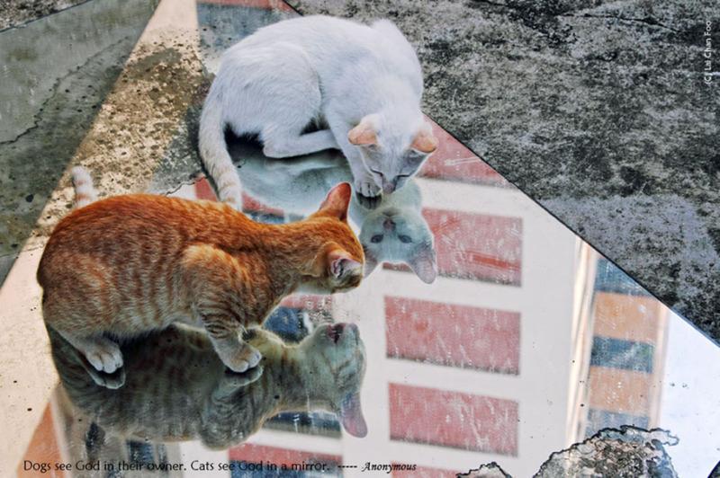 Stray cats oh Singapore
