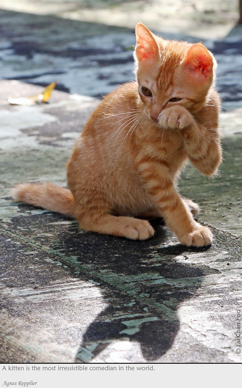 how to tell if a cat is stray