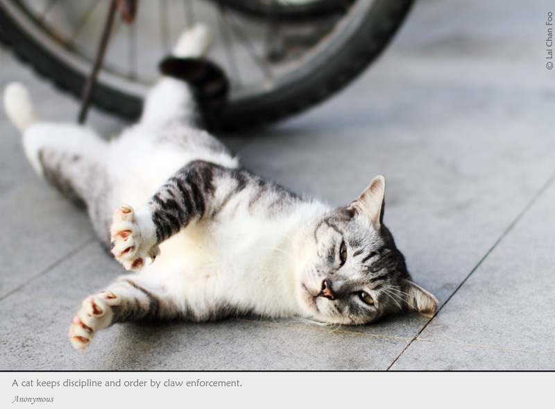 Stray Cats of Singapore (#118)