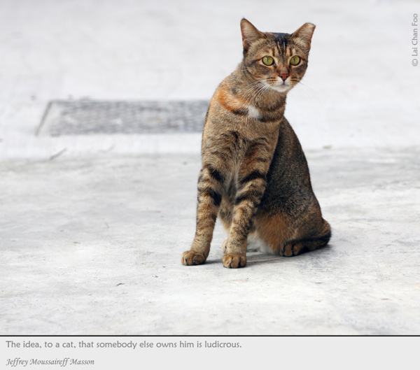 Stray cats of Singapore