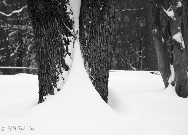 Snow Drift in Tree