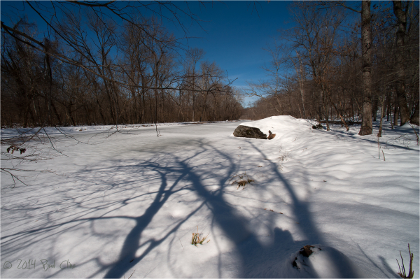 Towpath in Winter