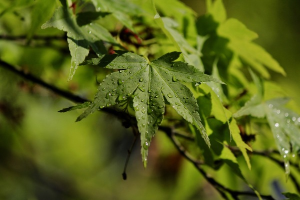 leaves... dew... light... morning...