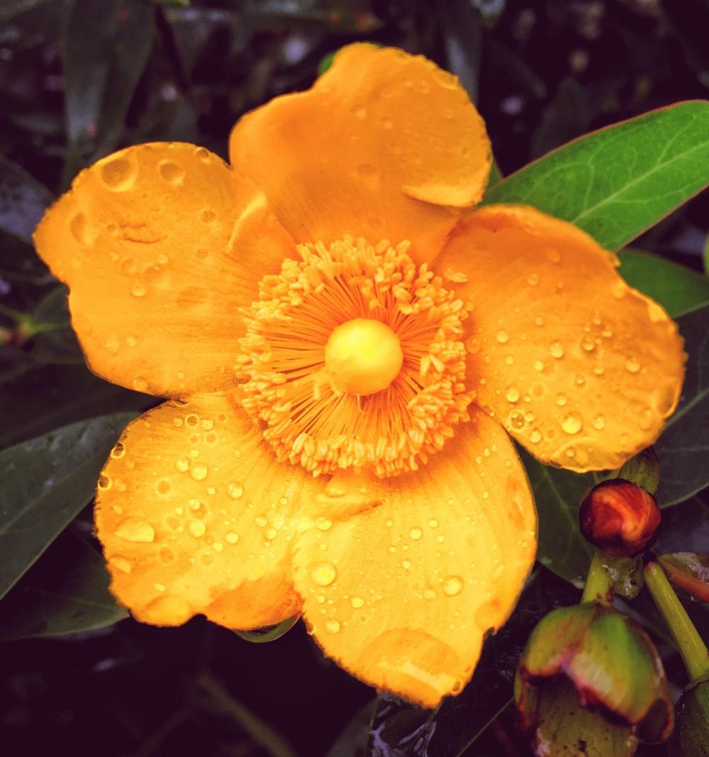 rainy day blossom