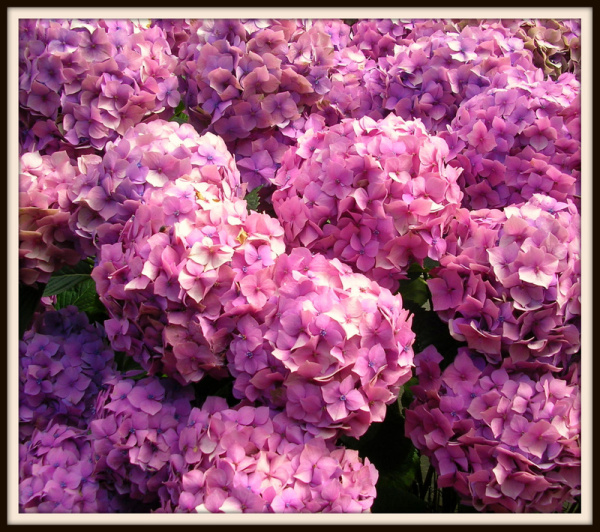 Great Balls of Flowers