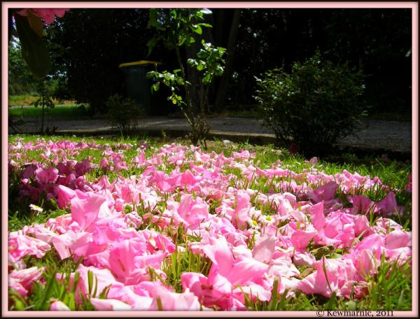 The Petal Lawn