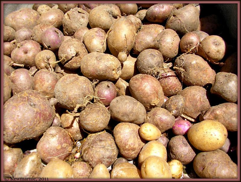 Maori Potatoes