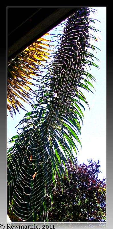 The Spider's Web Hangs In Front Of The Echium