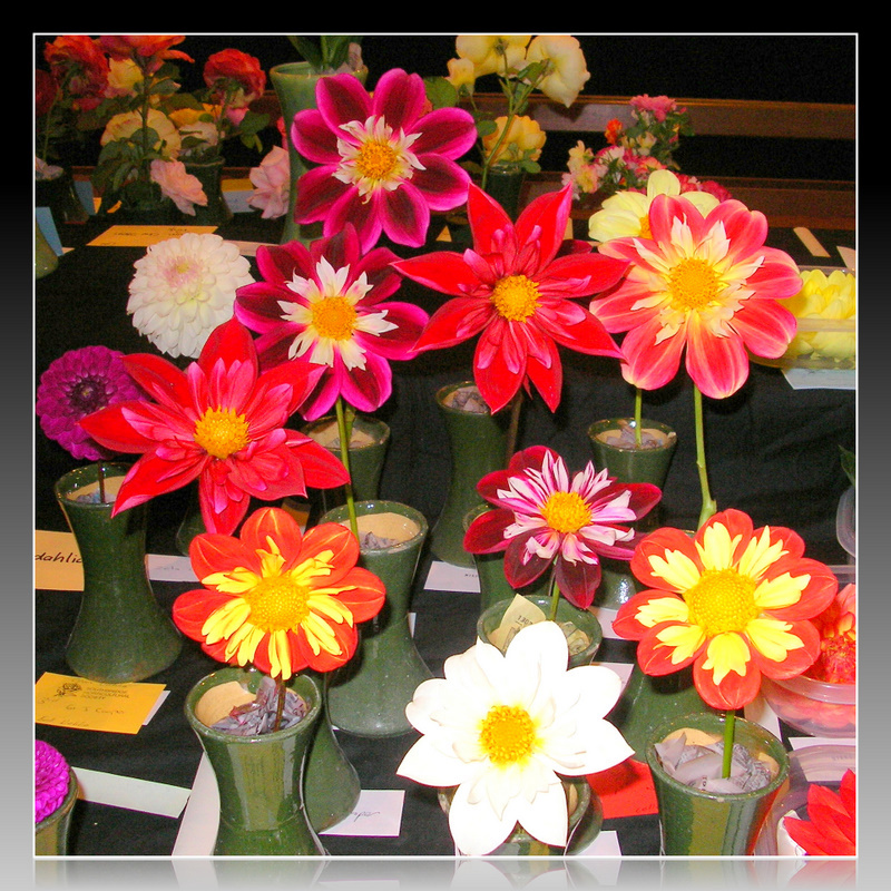 Flowers On Show