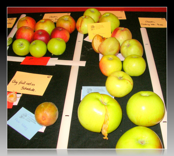 After The Apple Judging