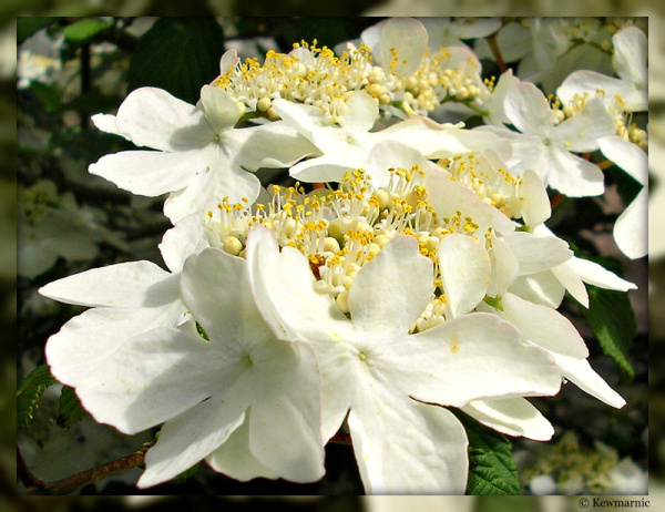 Pretty White Flower