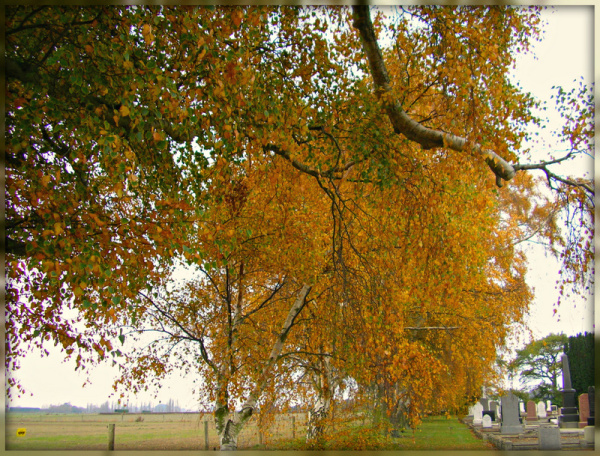 The Cemetery In The Autumn