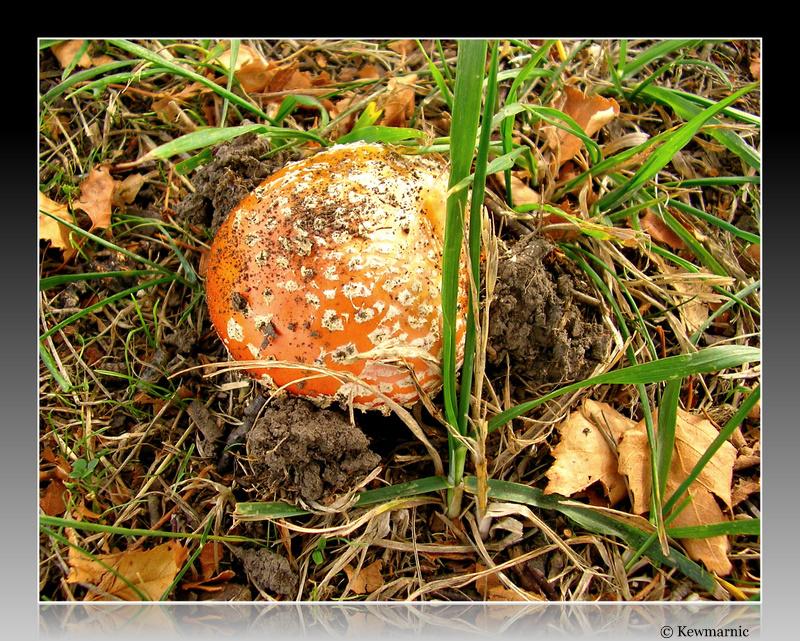 The Fungi Emerges