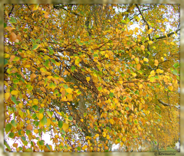 The Golden Leaves Of Autumn