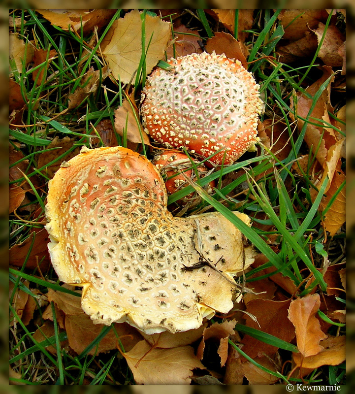 Amongst The Leaves The Fungi Grow