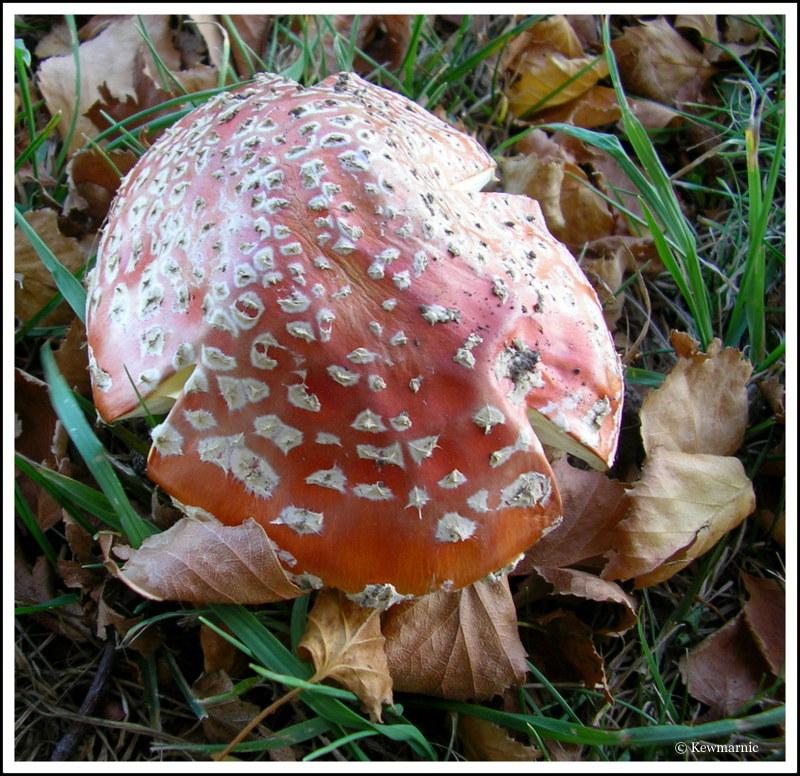 Fungi In The Autumn