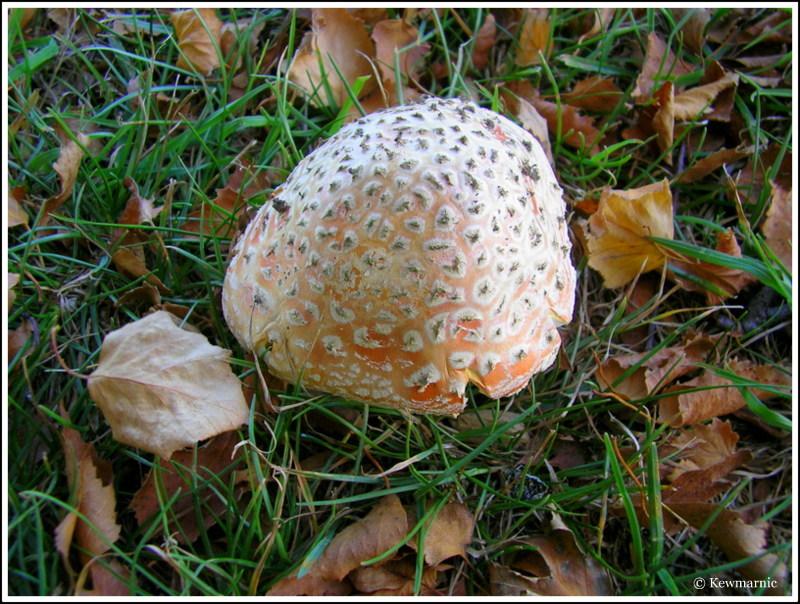 fungi, autumn