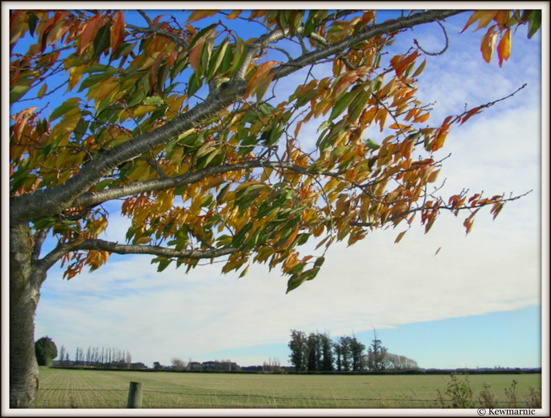 The Wind Catches The Autumn Leaves