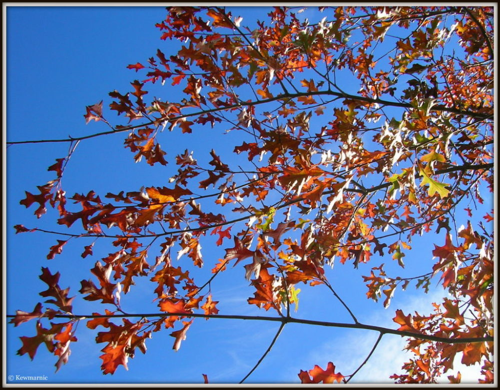 Red Meets Blue In The Autumn