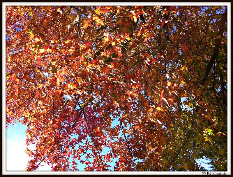 A Sunlit Autumn Canopy