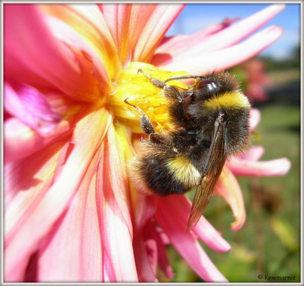 Mmmm, Sweet Nectar!
