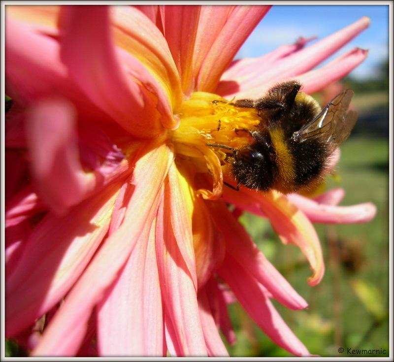 Bumblebee On Board!