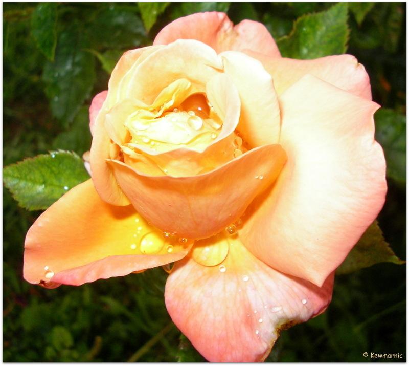 Raindrops on Roses, No Girls in White Dresses!