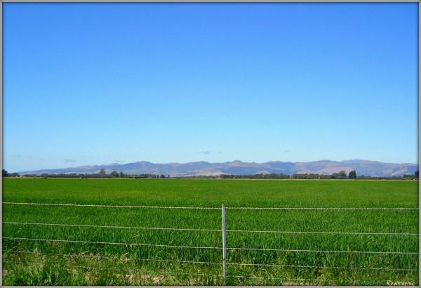 Farmland On The Canterbury Plains