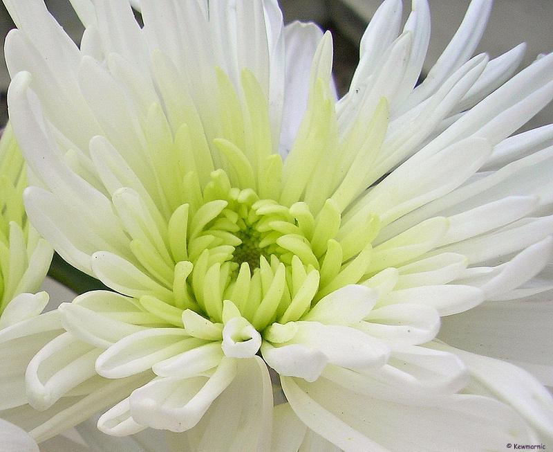 Radiant in White