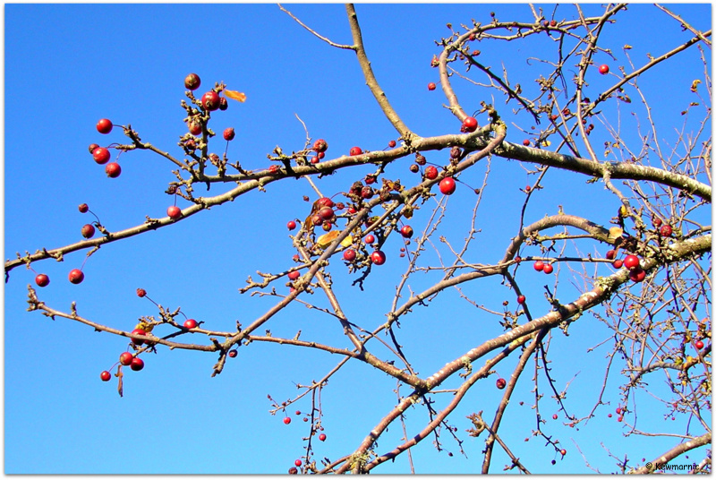 The Red Berries Of Autumn On A Blue Sky