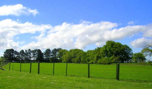 Cemetery Field, Leeston