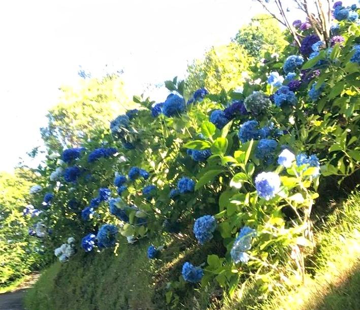 Blue Cascade
