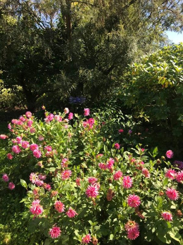 The Dahlia Garden