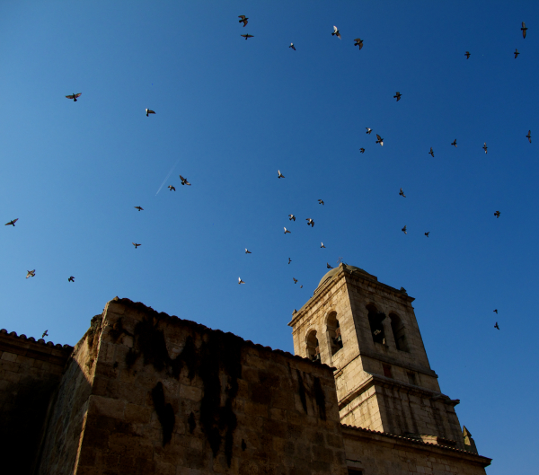 birds and church bells, Hontanas Spain