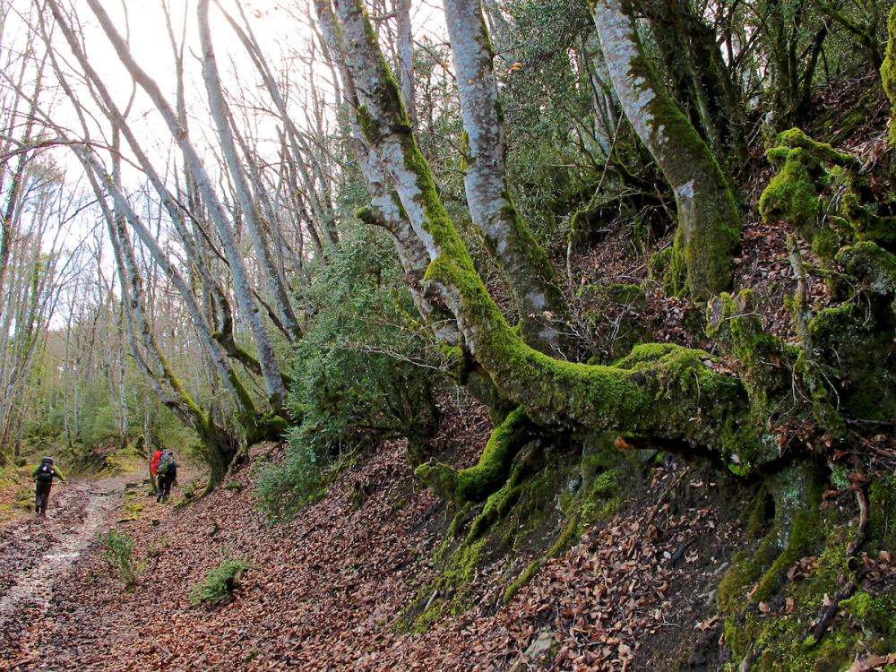 Forest near Zubiri, Spain  2012