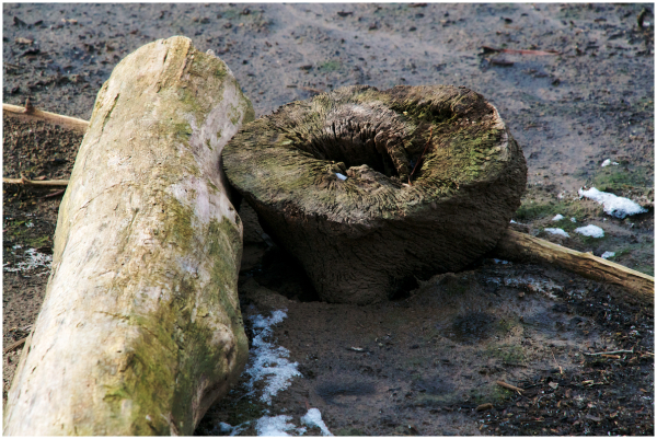 Trunk and stump together
