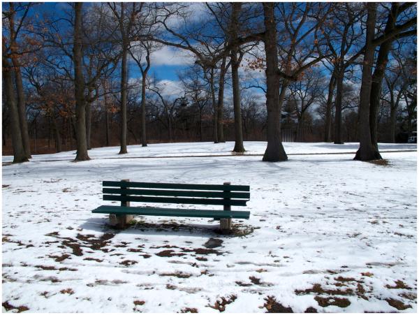 urban forest in winter