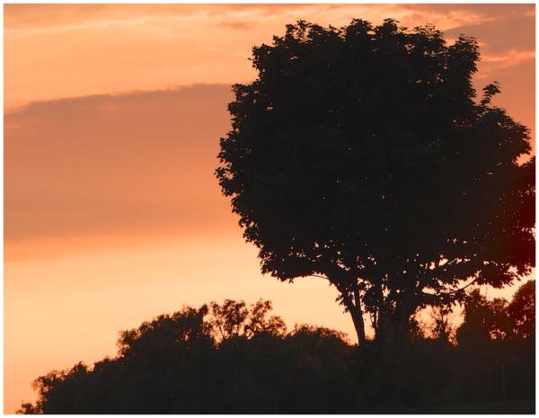 Orange skies at night...