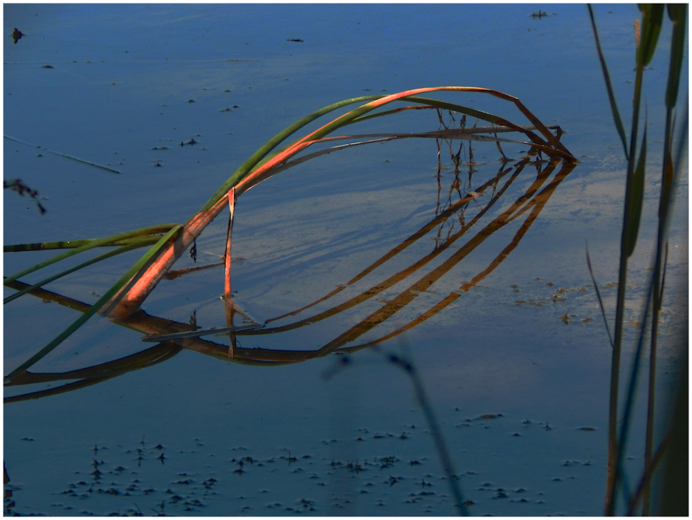 Symmetrical reeds