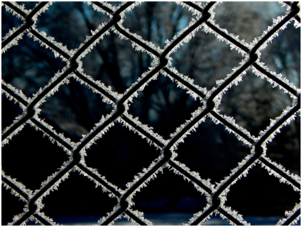 Frost fence