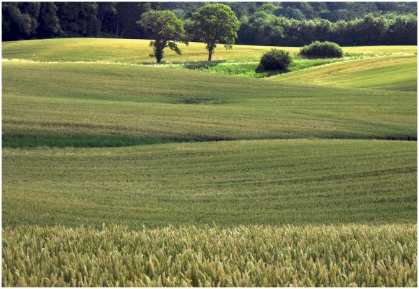 Gently rolling fields