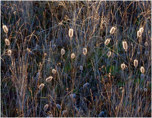 Roadside weeds