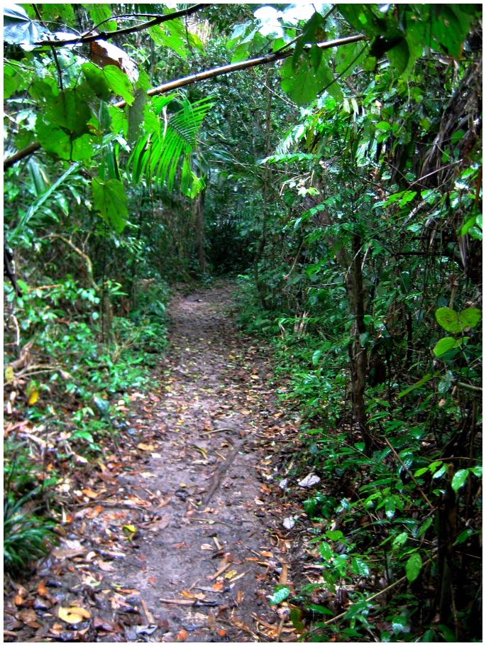 Walking rainforest paths
