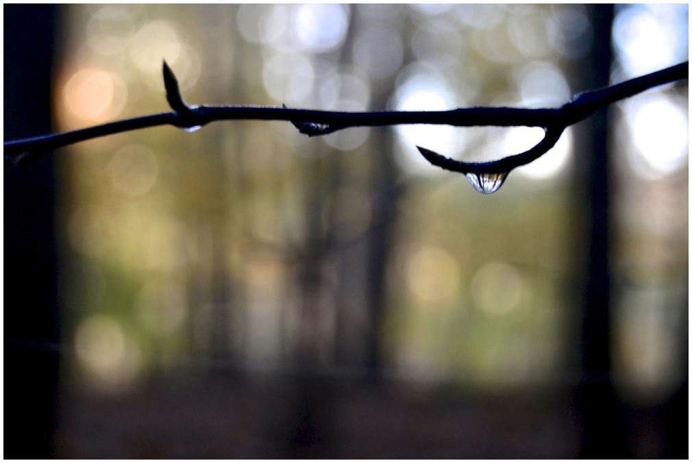 Morning raindrop