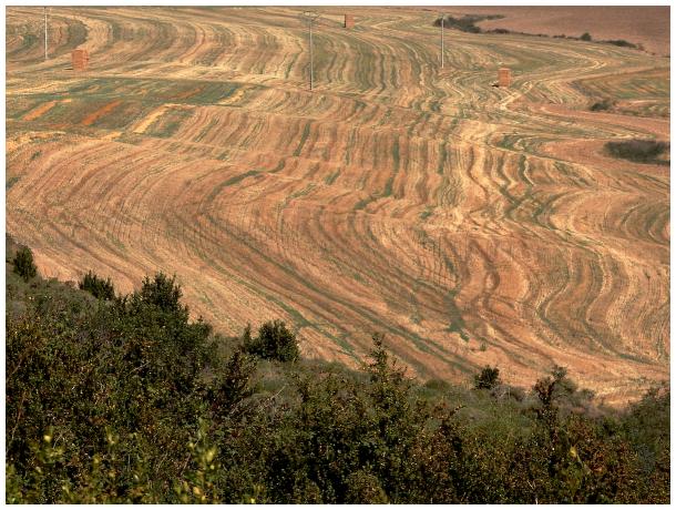 Field patterns