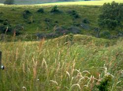 Northern Danish landscape